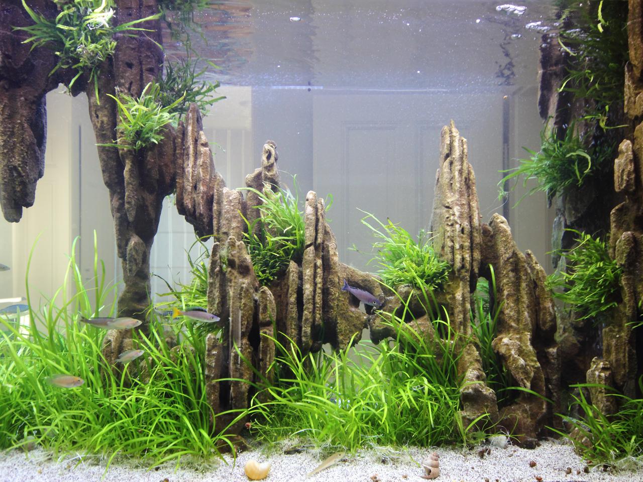 Aquarium Geminee sur mesure